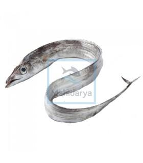 ماهی یال اسبی