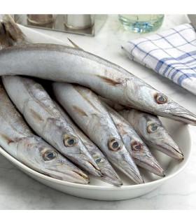 ماهی کوتر (باراکودا)