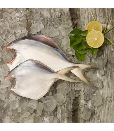 ماهی حلوا سفید یا زبیدی