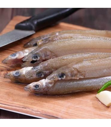 ماهی شورت