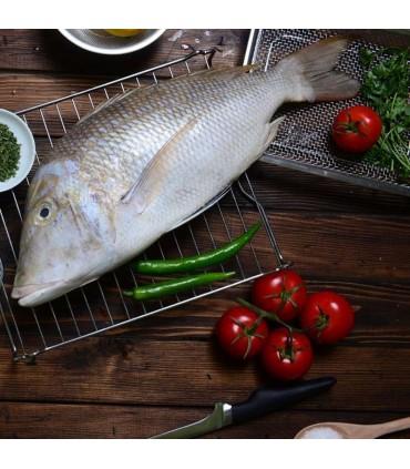 ماهی شهری