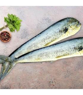 ماهی گالیت
