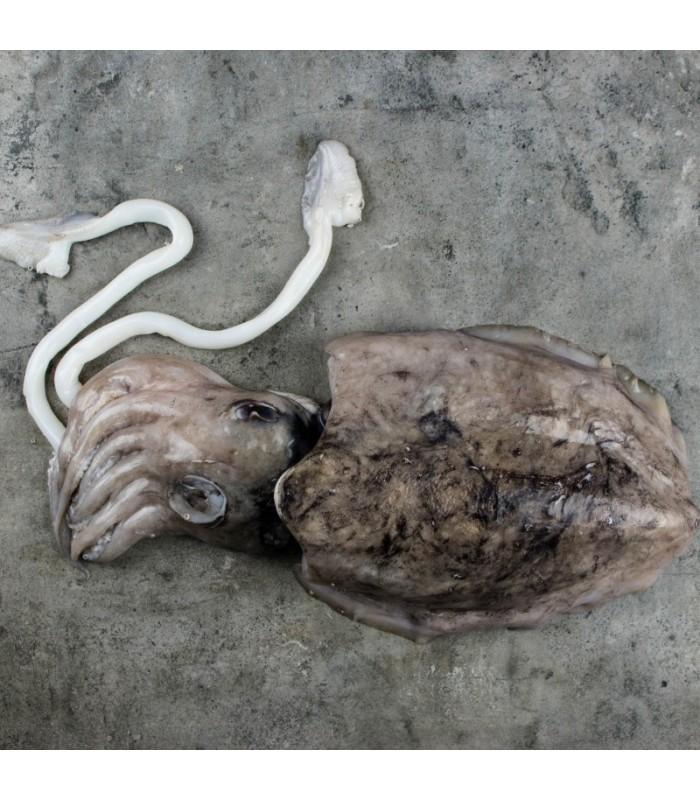 ماهی مرکب