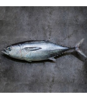 ماهی تن (ماهی هوور)