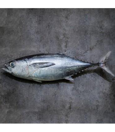 ماهی هوور