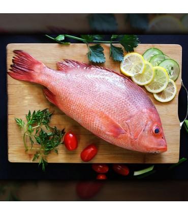 ماهی چمن