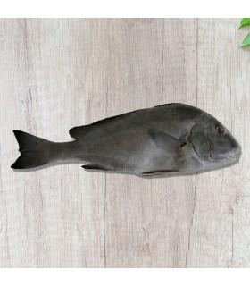 ماهی خنو