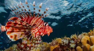 درباره کشنده ترین جانور دریایی چه میدانید ؟!