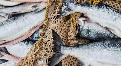 بهترین و خوشمزه ترین ماهی های جنوب ایران + خواص هر کدام