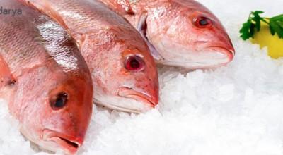 5 راه آسان برای تشخیص ماهی تازه از فاسد