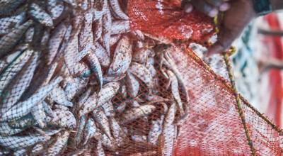 تغییر شکل ظاهری ماهی از زمان صید تا زمان فساد