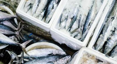 درباره تفاوت های ماهی تازه و منجمد چه میدانید؟